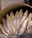 Un surtido de sardinas