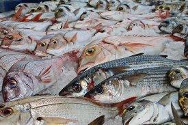 Los pescados son protagonistas