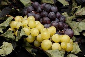 Posibilidades uva
