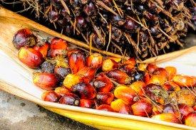 Qué es el aceite de palma