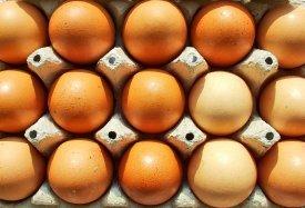 Varios huevos en una huevera