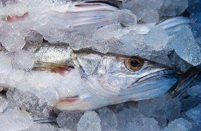 Cómo comprar y conservar pescado
